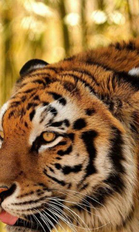 大型猎食动物图片